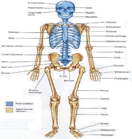 organ system in hindi