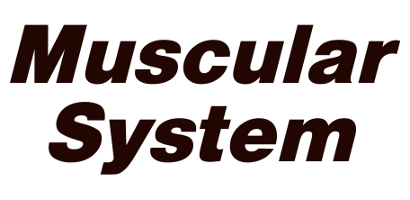 Muscular systemfinal
